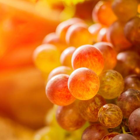 Rote Weinblätter Beinumschlag