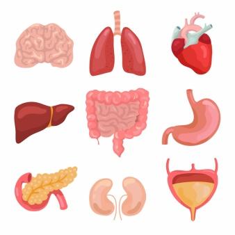 Organeinfluss-